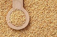 Зерно амаранта дорого в неограниченном количестве