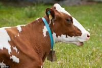 Спермопродукция от немецких быков-производителей