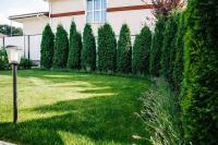 Посадка декоративных и плодовых деревьев,кустов,укладка рулонного газона