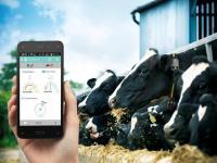 Система виявлення корів в охоті Heatime (ХІТАЙМ Ізраїль)