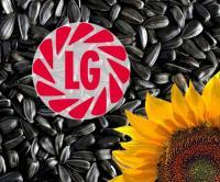 Семена подсолнечника производителя Лимагрейн