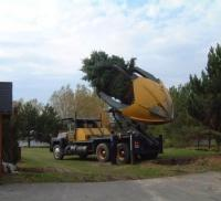 Услуги по пересадке крупных деревьев