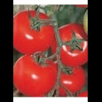 Семена томатов Роксолана F1 100 шт. Акция!