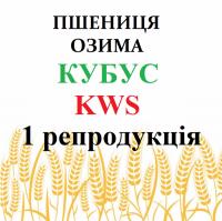 Пшеница озимая Кубус (Cubus Kws) 1 репродукция