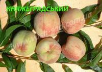 Саженцы персика Княжеградский
