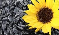 Семена подсолнечника Белочка