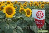Семена подсолнечника 5663 LG ЕВРО-ЛАЙТНИНГ/CLEARFIELD, А-Е заразиха LG/Лимагрейн/Limagrain