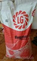 Семена подсолнечника МЕГАСАН/MEGASUN (заразиха А-Е) ЛГ/LG/Лимагрейн/ Лімагрейн/ Limagrain(США)