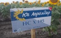Семена подсолнечника НС Адмирал (НСХ-195), самый урожайный гибрид сербской селекции, 60 ц/га!