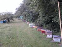 Пчело пакеты. Матки карпатской породы