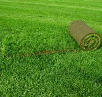 Зеленый газон все лето - это реально
