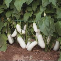 Семена баклажана Аретуза (Aretussa RZ) F1 1000 сем