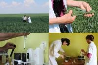 Функциональная листовая экспресс-диагностика питания растений