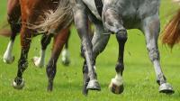 Для Лошадей - для отличной физической формы и здоровых копыт