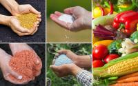 Удобрение Любофоска для зерновых культур