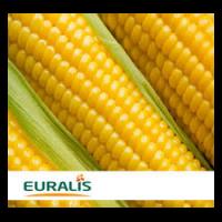 Семена кукурузы ЕС Якари, Euralis