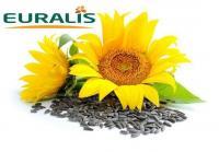 Семена подсолнечника ЕС Ниагара, Euralis
