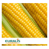 Семена кукурузы ЕС Хорнет, Euralis