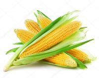 Семена кукурузы NK Thermo (НК Термо, FORCE ZEA), Сингента