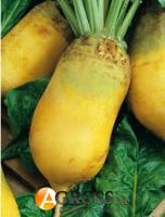Семена свеклы кормовой Эккендорфская желтая, Професiйне насiння, 100 г