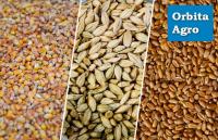 Услуги по очистке и калибровке семян