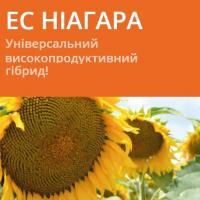 Семена подсолнечника ЕС НИАГАРА / ES NIAGARA (A-G+)