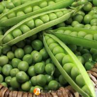 Семена гороха Болеро, May Seed, 1 кг