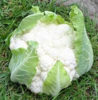 Семена капусты цветной Клипер F1, Clause, 2500 шт