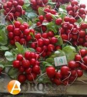 Семена редиса Селеста F1, Enza Zaden, 50000 шт (калибр 2.75 - 3.0 мм)
