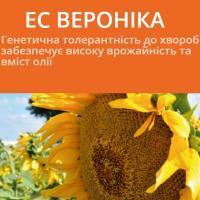 Семена подсолнечника ЕС ВЕРОНИКА / ES VERONIKA (A-F)