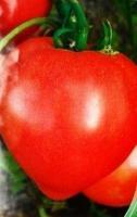 Семена томатов Бычье сердце красное, Элитный ряд, 1 г
