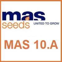 Семена кукурузы MAS 10.A / МАС 10.А Maisadour Semences (МАИСАДУР СЕМАНС)