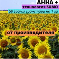 Семена подсолнечника гибрид Анна +
