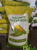 Семена кукурузы Оржица 237МВ Экстра (ФАО 240)