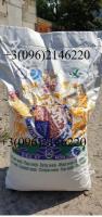 ОРИГИНАЛ! Семена подсолнечника VIKING F 696 канадский трансгенный гибрид