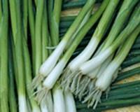 Энтита, лук на перо 1 кг ПМП Тирас