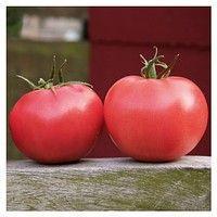Афен Ф1 250 семян Владам, томат розовый