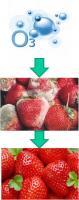 Применение озоновых технологий для увеличения длительности хранения свежих ягод, овощей и фруктов