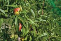 Сетка от птиц (4м*5м) защитная на деревья, кустарники, виноградники