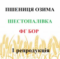 Шестопаловка Озимая мягкая пшеница 1 репродукция