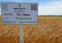 Семена озимой пшеницы Подолянка 1 репр.