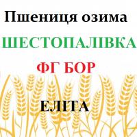 Шестопаловка Озимая мягкая пшеница Элита