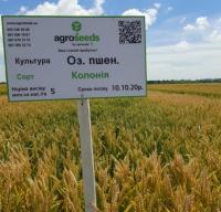 Семена озимой пшеницы Колония / Colonia 1 репродукция от Agroseeds by agrotrade