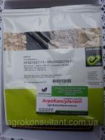 Семена кабачка Ардендо F1 (Enza Zaden) 500 семян - ранний гибрид (40-45 дней), светлый