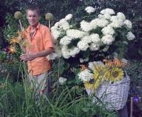 Гортензия белая шаровидная, 2-х летние саженцы