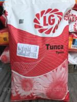 Семена подсолнуха Limagrain Tunca / Лимагрейн Тунка Оригинал!