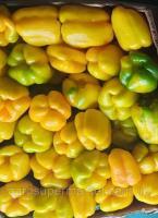 АНТАЛИЯ F1(ANTALIA F1)Перец желтый куб Ранний гибрид для закрытого и открытого грунта
