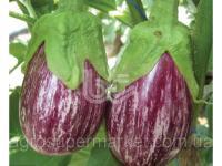 Семена полосатого баклажана BT Alacizgili F1, ультраранний, 500 семян BT TOHUM