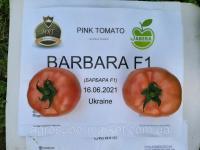 Семена розовый томат BARBARA F1 (БАРБАРА F1) Супер ранний, MRTOHUM Турция
