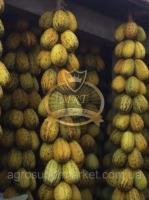 ROYAL F1 Среднепоздний сорт зимней дыни 1000 семян
